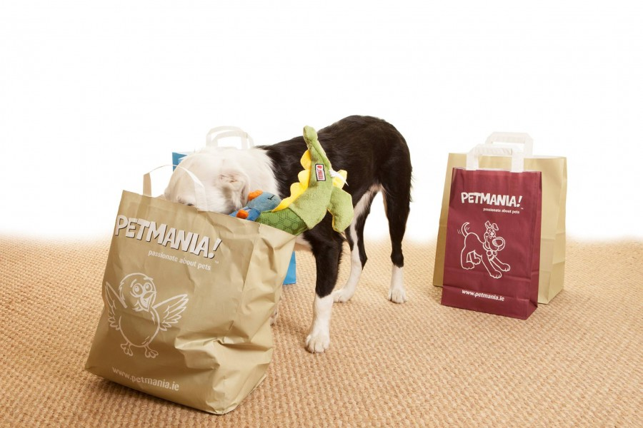 Microchipping for dogs & cats in Petmania