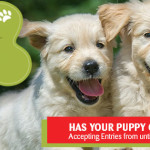 Petmania Puppy of the year
