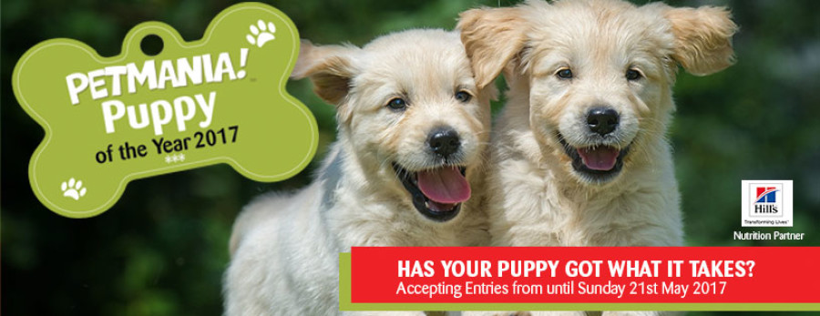 Could your Puppy be 'Puppy of the Year'?